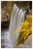Forsythia Falls