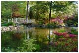 Magical Morning at Sayen Pond