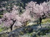 País Valencià, Spain (Feb - Mar 2011)