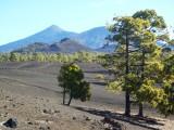 Tenerife, Spain (Dec 2011 - Jan 2012)