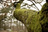 L'esprit de la forêt...