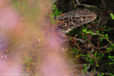 Amfibians & reptiles