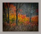 Autumn in JingYueTan