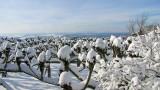 Gallery: Winter im Siebengebirge