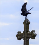 Crow Clearing Cross