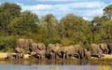 Elephant Plains