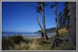 Oregon Coast 2011