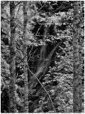 Waterfall & Birches along Money Creek