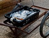 PC273079_fish cart