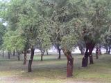 Road to Lisbon cork trees4.JPG