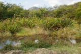 Antigua 2012-14
