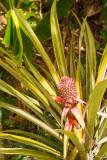Antigua 2012-16
