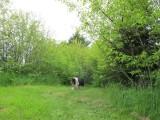 RH-sabrina-backyard.jpg