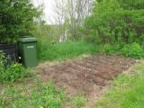 RH-strawberrybed-23-05-2011.jpg