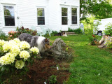 RH-lion-and-dogs-29-05-2011.jpg