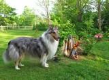 RH-sage-coyote-29-05-2011.jpg