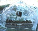 Chickadee in feeder