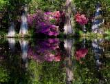 Flora Among Bald Cypress