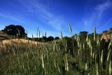 Wild-Grass-Field