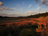 Autumn Marsh Scene