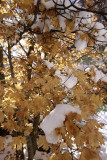 Autumn colors and the first snow
