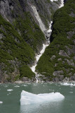 Tracy Arm Fjord, floating ice