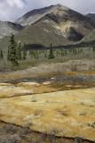 Near Matanuska Glacier