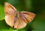 Purple Leaf Blue
