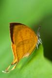 Yamfly