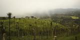 8275 Rain Forest