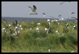 0951 Breton Island