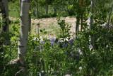 259_Ang-CO-2011-263.jpg