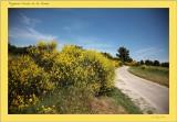 Images de Provence  2012