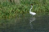 2012 Egrets