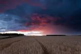 Barley Squall