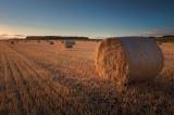 Harvest Warmth
