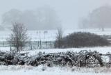 Week 6 Snow_20120205_0176_ed2.jpg