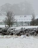 Week 6 Snow_20120205_0176_ed3.jpg