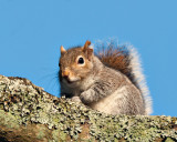 Squirrel_DSC_46004.jpg