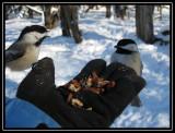 Liz feeding chickadees at Goose Island Park  ©  Liz Stanley