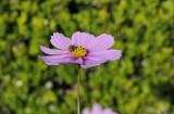 Winter's Bee