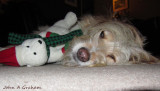 Ozzy and Polar Bear