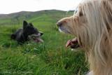 Oz and Tess