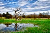 Dead tree  reflection.jpg