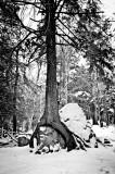 A favorite tree & rock 2