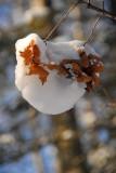 Leaf-Snowball
