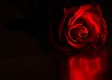 An evening with a red rose