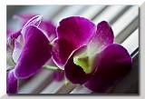 Thailand  orchids...