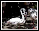 flamingo 's...