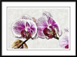 on the orchids I worked with the architectural sketch ...